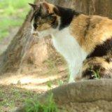 猫 オス メス 見分け方