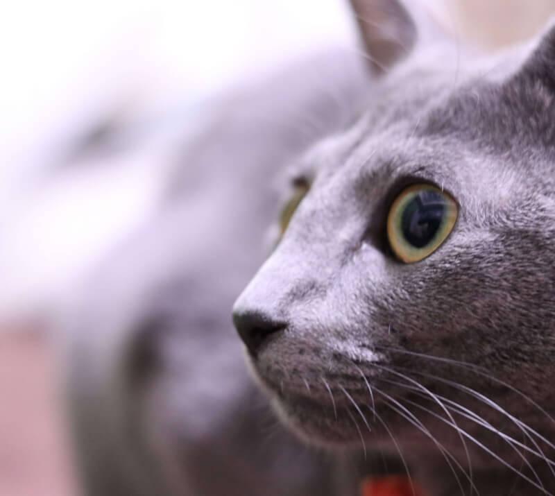 猫 避妊手術 体験談