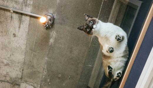 【必要?】猫の肉球からはみ出た毛は危ない?カット方法とグッズを調べてみた