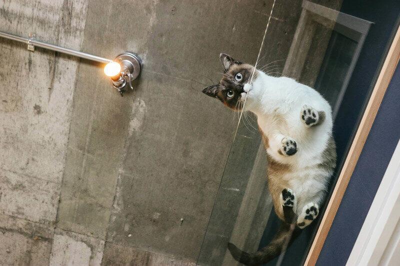 猫 肉球 毛 切る