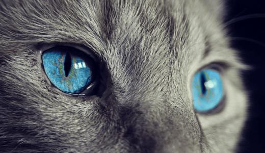 猫の目の色の種類や違いの理由は?毛の色が原因?色が変わると病気?色んな謎を調べてみた
