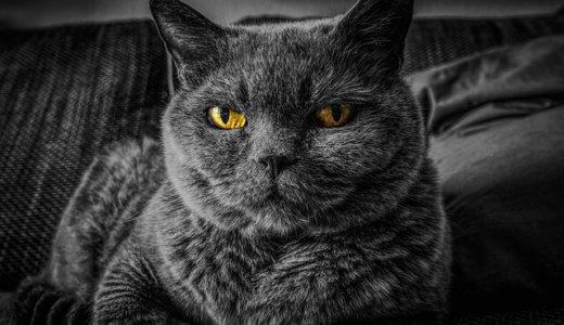 【注意】猫の目の色が変わった…それ病気かも!色別で原因や理由を解説!