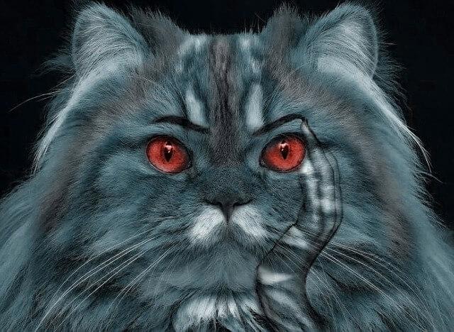 目の色 猫 レッド