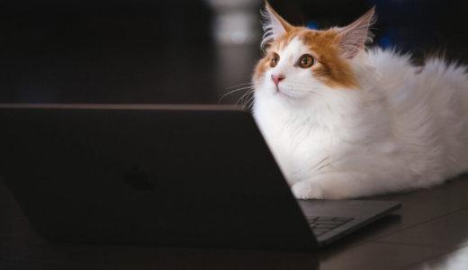【体験談】猫の雄と雌で性格は違う?性別ごとの行動と飼いやすい猫とは
