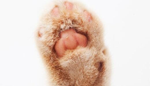 【雑学】猫の肉球の色で性格や病気がわかる?うちの猫の肉球を調べてみた