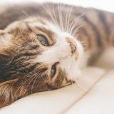 猫 避妊手術 性格