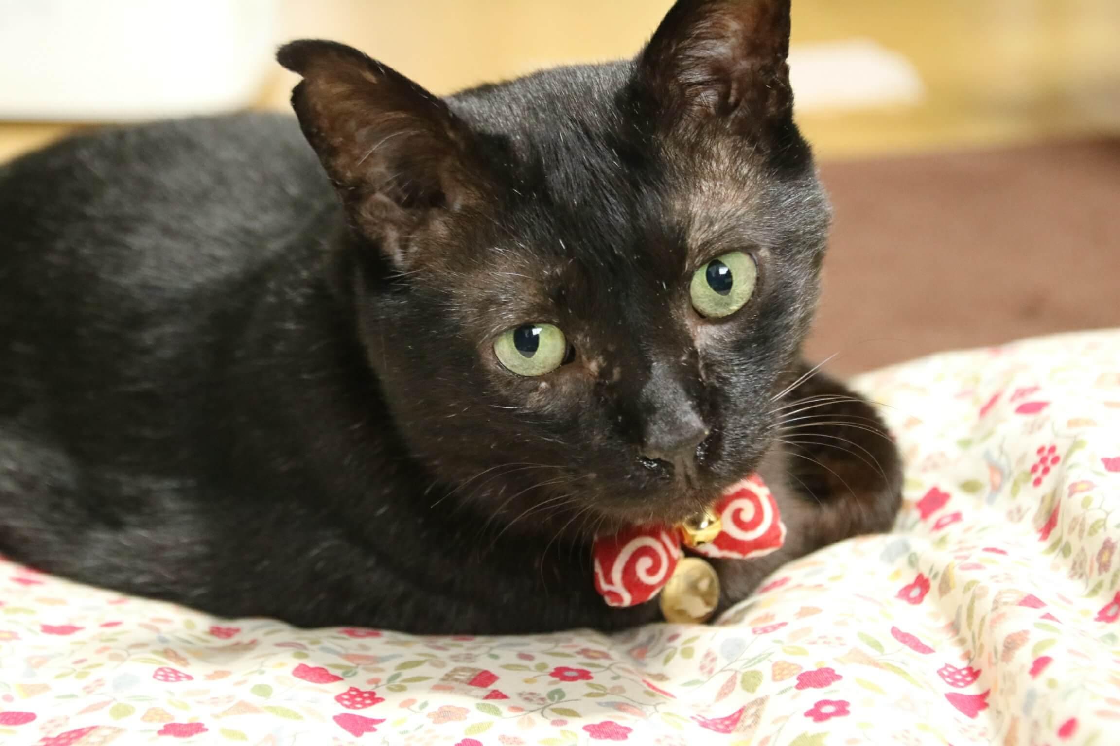 猫 目の色 種類 違い