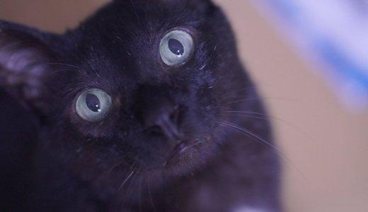 【日常】12歳の猫・くろくんの食い意地に唖然!食欲が止まらんのですけど…
