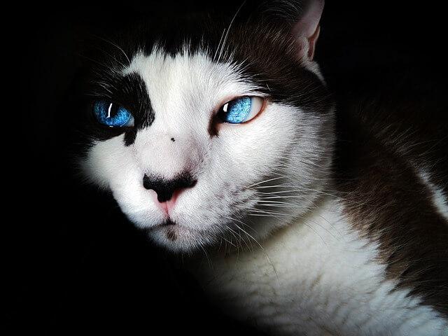 猫 目の色 種類