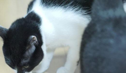 猫がエサを選り好みする…その理由と好き嫌いを直す効果があった対処法教えます