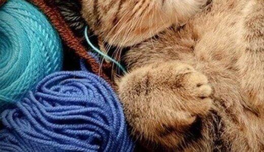 猫 羊毛フェルト 作り方