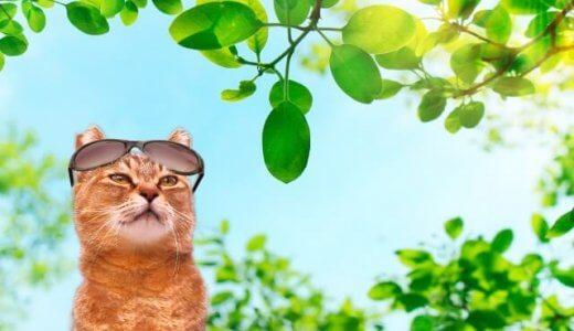 【実験】猫は28℃と30℃どちらが好きか試してみた!猫を飼うとクーラー必要?ない場合や嫌いな場合は?何度が適温?