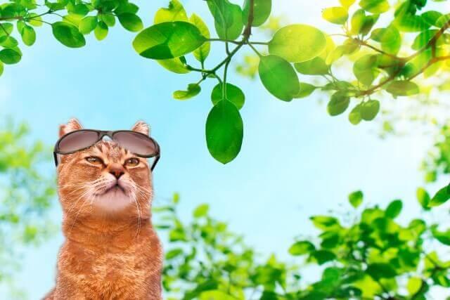 猫 クーラー 熱中症