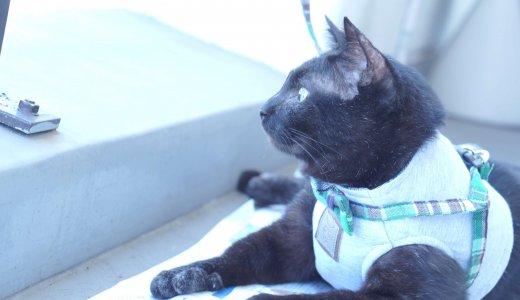 猫は服や腹巻や術後服やハーネスを着ると歩けない・動かないのはなぜか調べてみた│おもしろ発見
