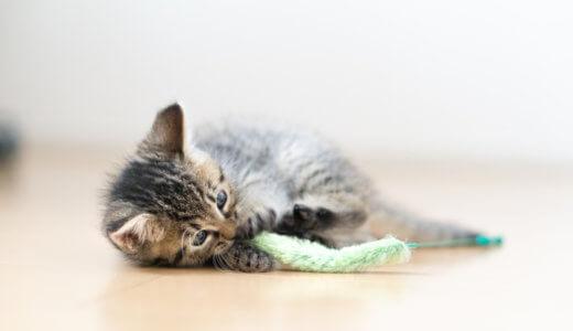 遊ばない猫でも飽きないおすすめのおもちゃ!遊び方のコツや猫の運動の必要性と遊ぶ時間は?