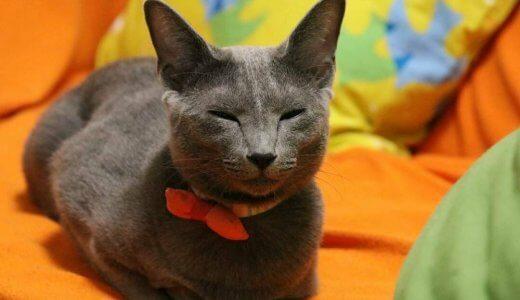 【諭吉の七不思議】猫は夢を見るの?寝ている時にピクピク痙攣したり寝言を言う原因