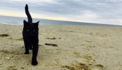 【おススメ】ニオイなし!手入れ楽!うちの猫に好評のトイレの砂をこっそり教えます