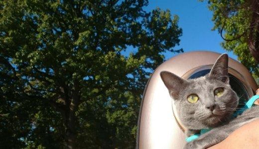 【体験談】猫に散歩は必要?リードやハーネスは?したがる時やさせたい時に注意する事