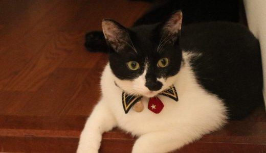 【日記】しろくろくんの鳴き方が変!にゃあと鳴けない猫のお話