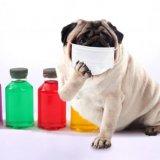 猫風邪 症状 予防法
