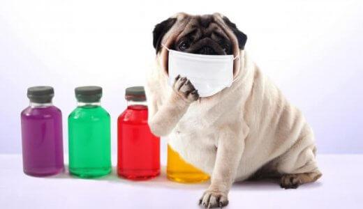 【体験談】猫風邪は完治しない?多頭飼いはうつる?予防は必ずコレをやれ!