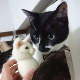 猫 羊毛フェルト におい