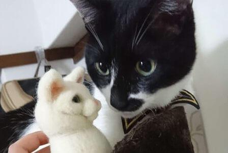 【検証】猫は羊毛フェルトにどんな反応をするのか?喜ぶ?怖がる?うちの猫で試してみた