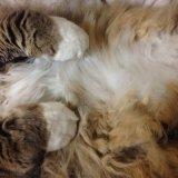 猫 お腹 たるみ ルーズスキン