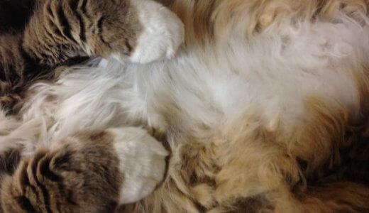 猫のお腹のたるみはルーズスキン!いつ出来る?ない子もいる?オスメスの違いや原因・役割