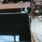 猫 エサ ご飯 砂かけ