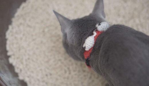 猫砂で悩んでる人!猫の体に安全なだけでなく散らばらずしっかり固まる猫砂を発見した