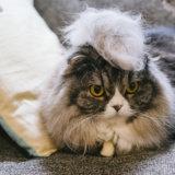 猫 ファーミネーター 模造品 見分け方