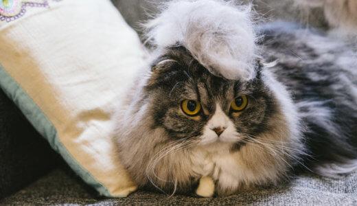 猫がファーミネーターを嫌がるので模造品か公式販売店に問い合わせてみた【見分け方付】