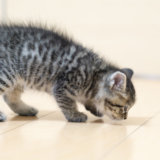 猫 嘔吐 毛玉 黄色