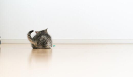 【猫砂/トイレで悩む人必見】実際に使ったおススメの猫砂やトイレ・病気についてのまとめ