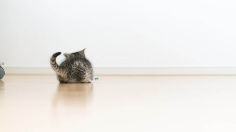 トイレ 病気 猫砂 体験談