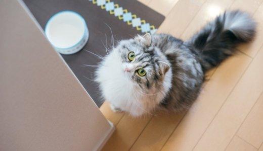 猫 吐く エサ ご飯 直後
