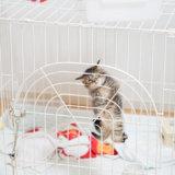 猫 水飲み器 ケージ おすすめ