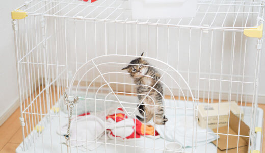 飲み水をこぼす猫にはケージ用給水器・リッチェルウォーターディッシュがおすすめ!レビュー・口コミ