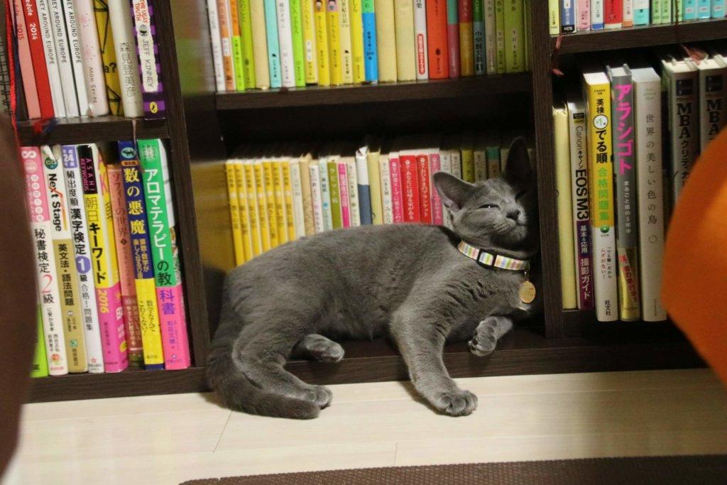 ロシアンブルー なつかない 猫