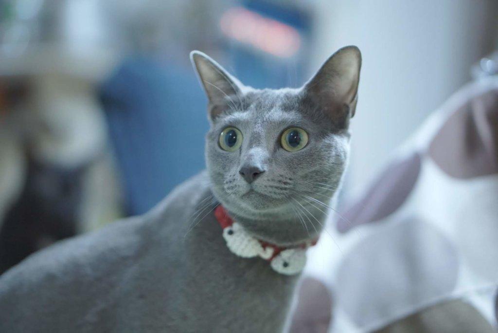 猫 首輪 必要 おすすめ 嫌がる 安全