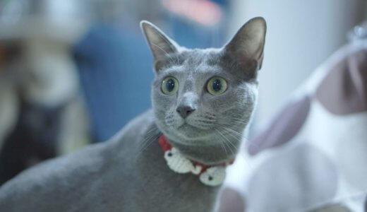 首輪を嫌がるうちの猫でもつけられた!安全でおすすめの首輪を紹介します│猫に首輪は必要か?