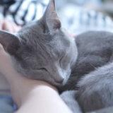 猫 ロシアンブルー なつかない 方法