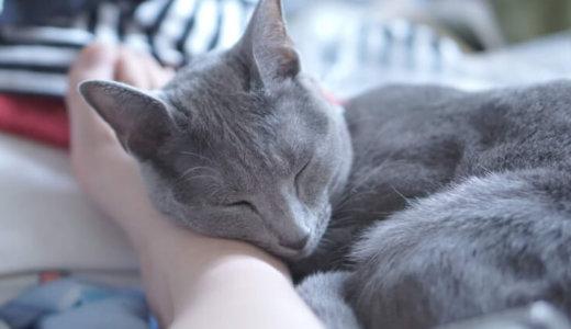 ロシアンブルーは懐かない?猫に好かれる方法見っけ!懐くまでの期間と嫌われる理由