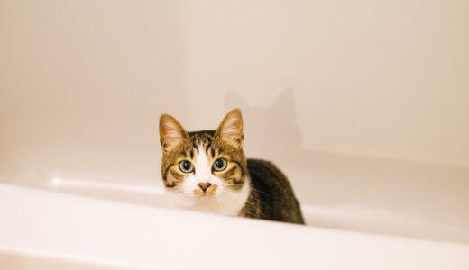 水・お風呂嫌いな猫でも汚れやフケが落ちる我が家のおすすめシャンプーと洗い方!│洗い流し不要・猫にお風呂は必要なのか?