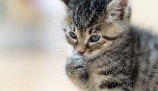 猫 噛む力 本気 強い 直し方