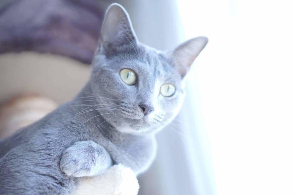 猫 瞳孔 左右 大きさ 違う