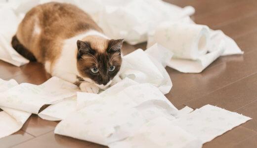 猫が嘔吐する程の便秘の解消・対処法や予防法は?おすすめのウェットフードも紹介│水を飲まない猫にも!
