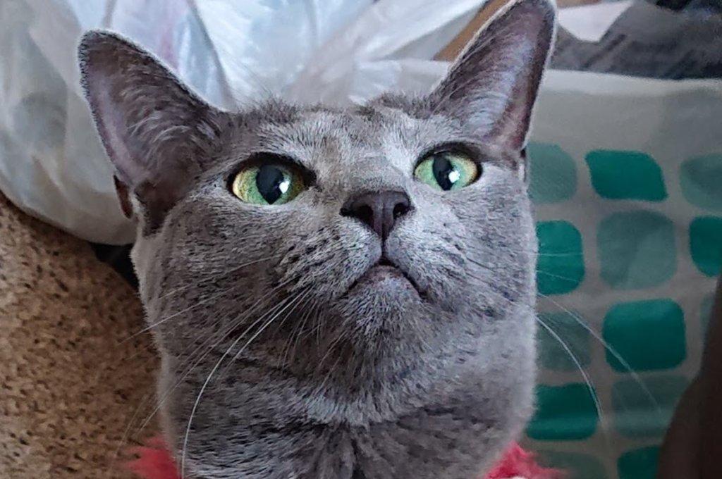 猫 瞳孔 左右 大きさ違う