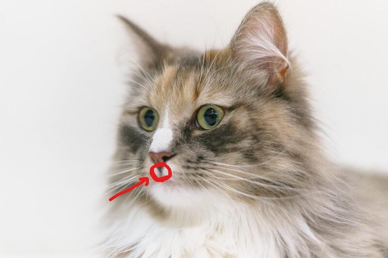 猫 ラキサトーン 与え方